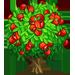 Guarana Baum